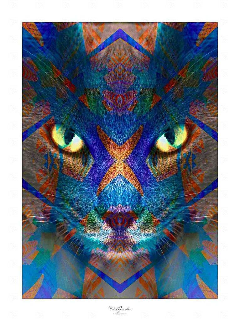 cat-ver-II-3.jpg