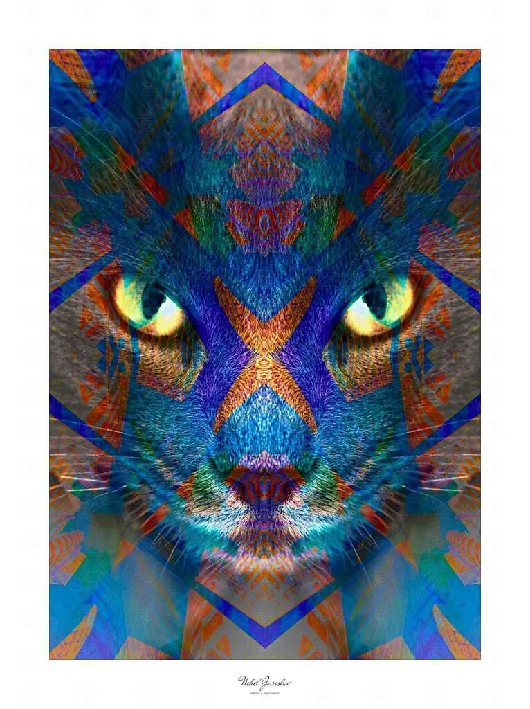 Kočičák - Kitten